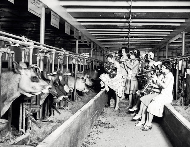 1930. Moo-sic for Moo Cows