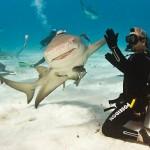 050643-shark-hi-5