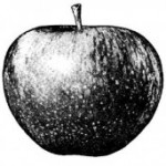 apple_logo-275×171