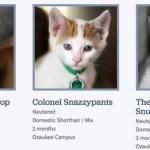Wisconsin-Humane-Society-Cat-Names-685×337