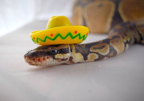 The-World's-Top-10-Best-Images-of-Snakes-in-Hats-7