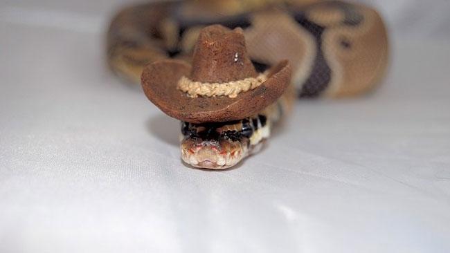 cowboy-snake